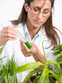 La homeopatía, eficaz para la cicatrización de los tratamientos de medicina estética