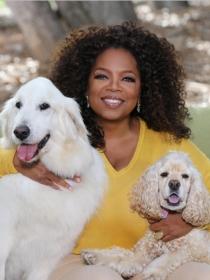 Perros de famosos: los Spaniel y Golden de Oprah Winfrey