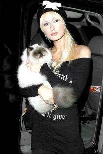 Mascotas famosos: Partis Hilton y su gato millonario