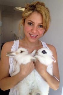 Mascotas famosos: Shakira y sus lindos conejitos