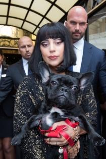 Lady Gaga, una diva y su mascota