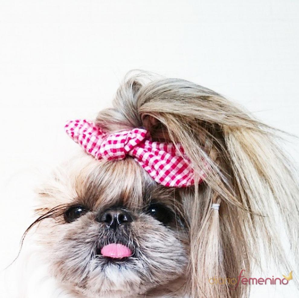 Peinados para perros el lado pin up de kuma - Peinados pin up fotos ...