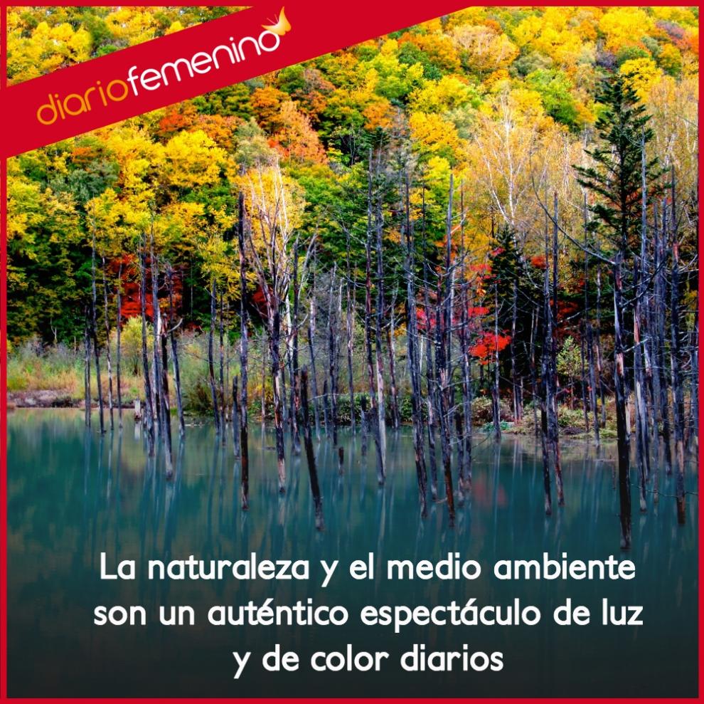 Frases de medio ambiente un espect culo de luz y color - Luz y ambiente ...