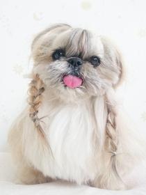 Beauty: Los peinados de famosas que copió la perrita Kuma