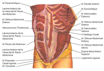 Los ejercicios a la osteocondrosis en la piscina