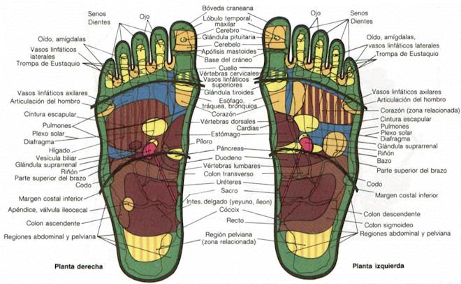 Mapa de reflexología de los pies