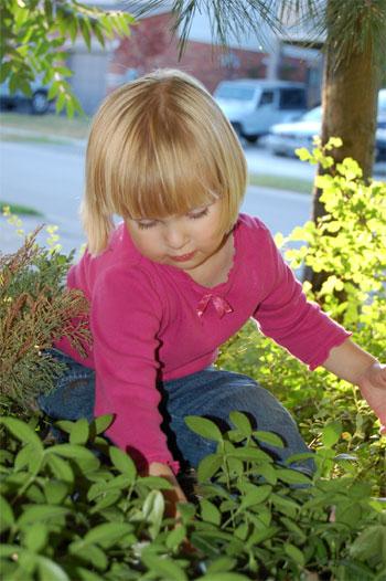 Decálogo para el cuidado de tus plantas