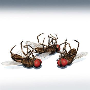 Trucos para espantar y matar mosquitos