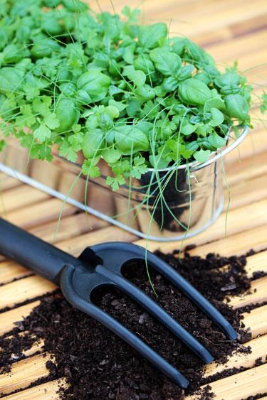 Gu a de cultivo y preparaci n de plantas arom ticas y de for Cultivo de plantas aromaticas y especias