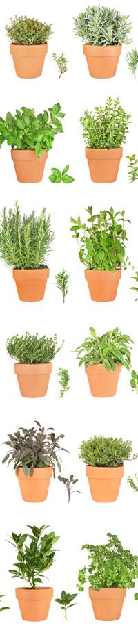 Propiedades de las plantas medicinales en compresas