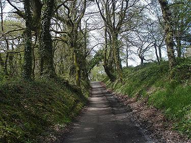 El Camino verde de Santiago
