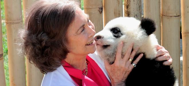 Divertida jornada de la Reina Sofía jugando con los osos panda del zoo de Madrid