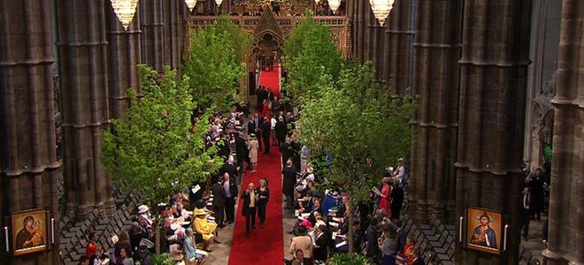 arboles en la abadia