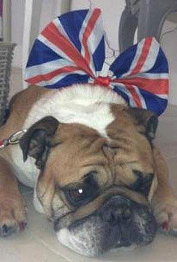 Isabel II, eclipsada en su jubileo por su marido, Kate Middleton y el perro de los Beckham