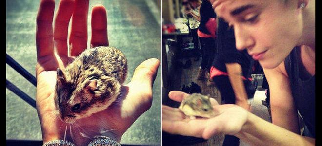 Justin Bieber despide a su hamster Pac