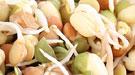 Cereales integrales: dieta de pueblos milenarios