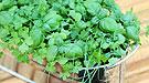 Guía de cultivo y preparación de plantas aromáticas y de condimento