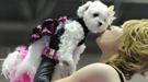 Las tendencias de 2011 para tener un perro glamuroso llegan desde Tokio