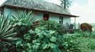 Alegra tu hogar con plantas de coloridas y alegres flores