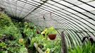 Huertos compartidos: cultiva gratis y ahorra en comida
