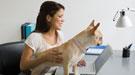 Trabajar con tu perro o gato: un nuevo puesto en la oficina