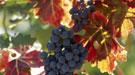 Fruta de otoño y sus beneficios
