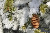 Piña para decorar el árbol de Navidad