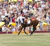 El Príncipe Harry de Inglaterra se cae del caballo