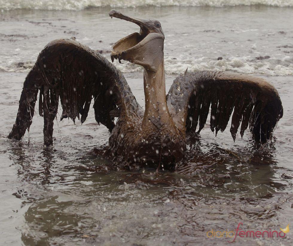 Catástrofe ecológica en el Golfo de México