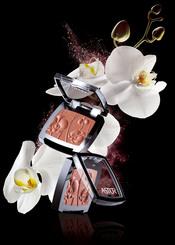 Color blush orquídeas de Astor