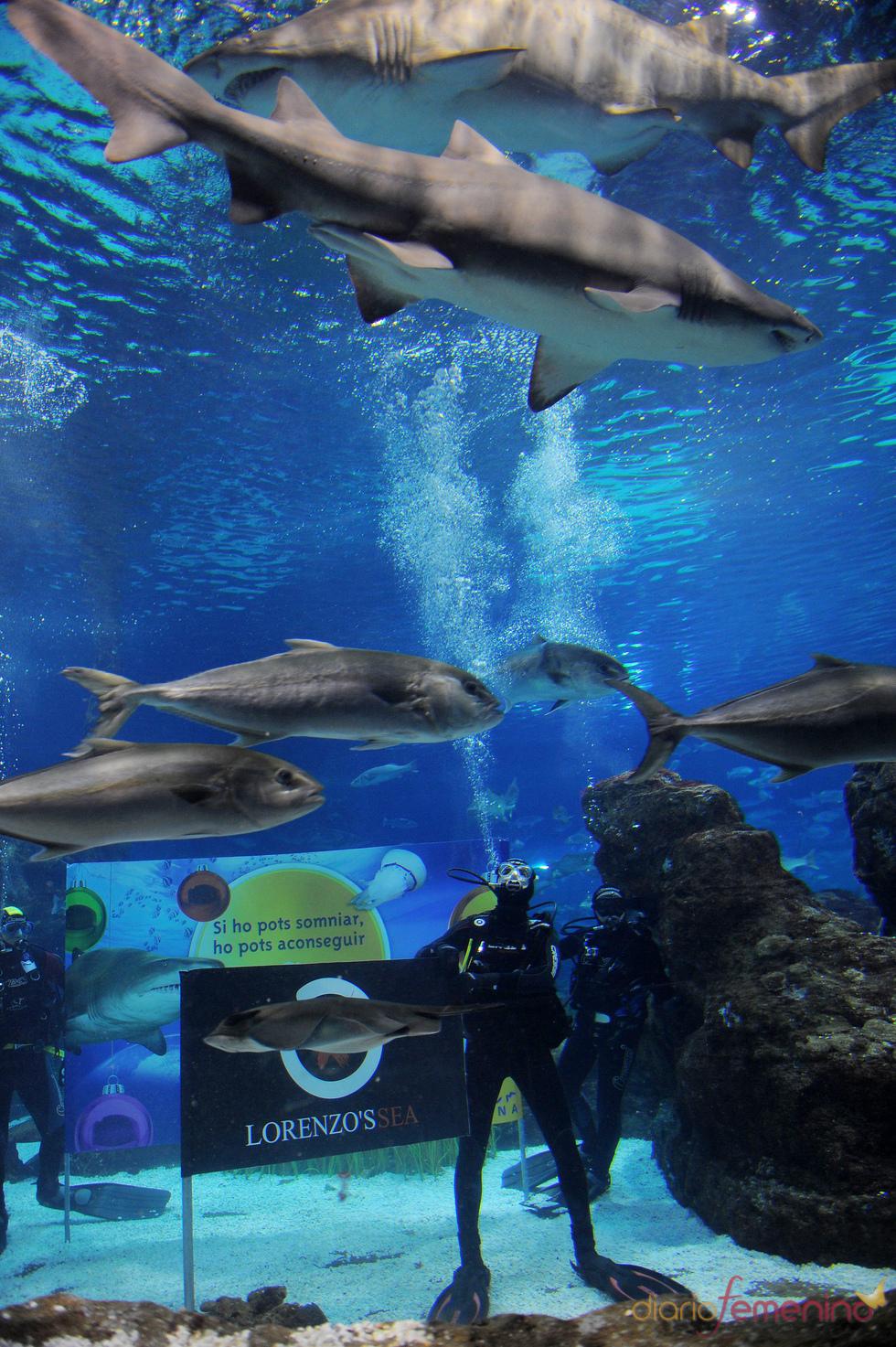 Jorge Lorenzo se divierte nadando entre tiburones