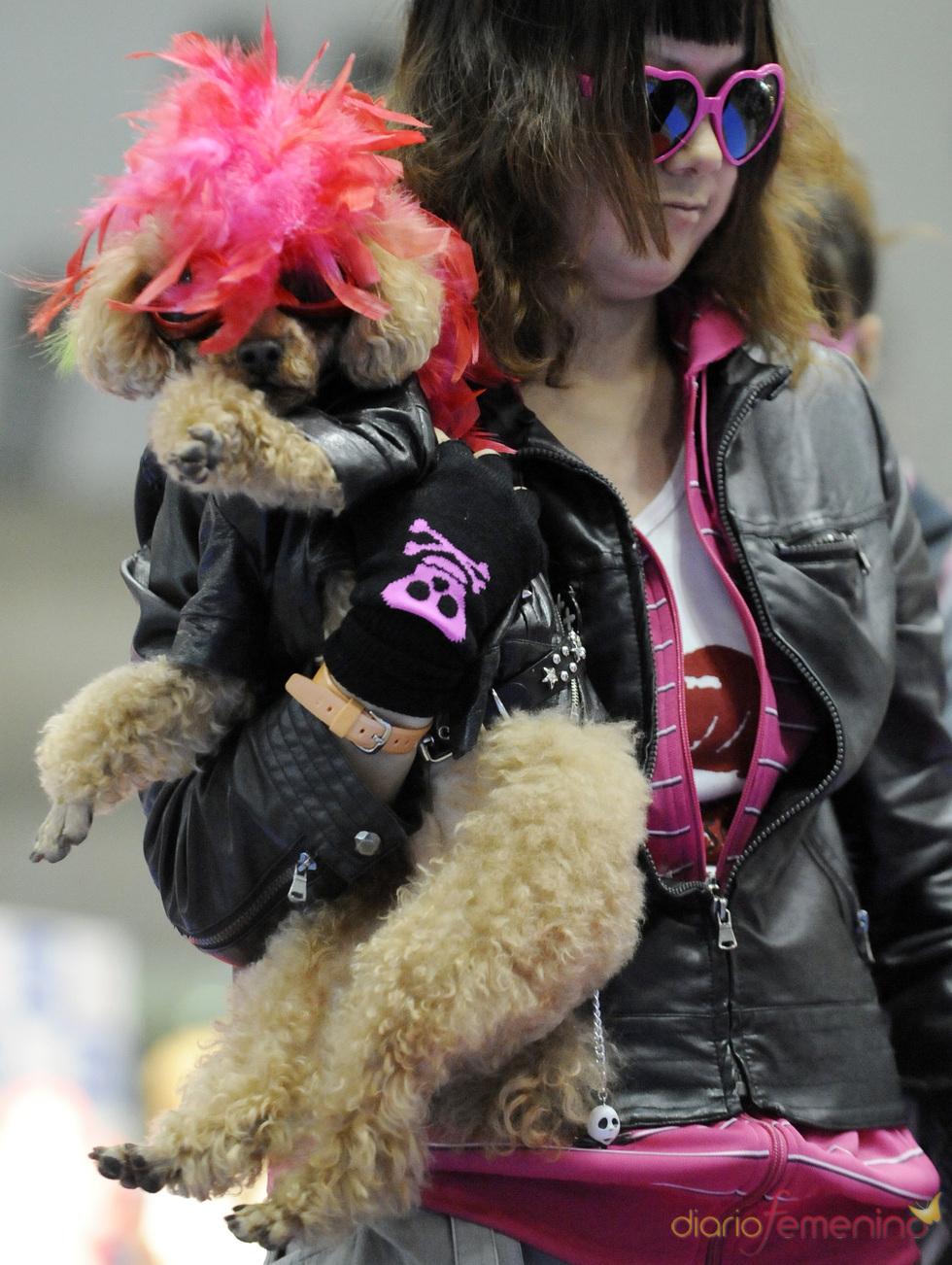 Perros rockeros en Tokio