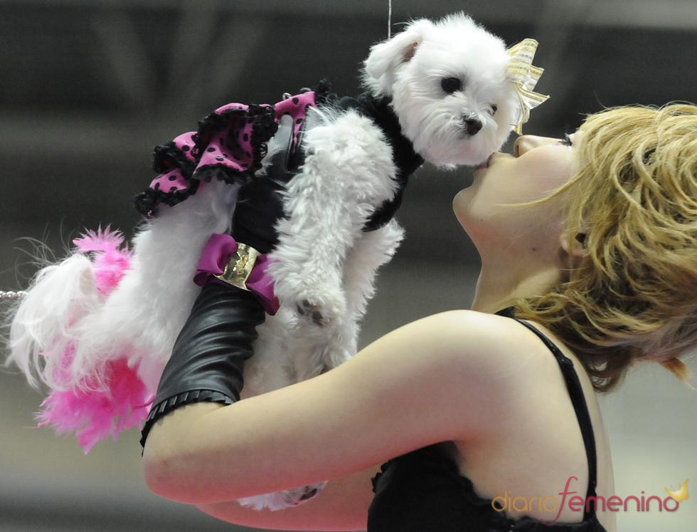 Perros flamencos en Tokio