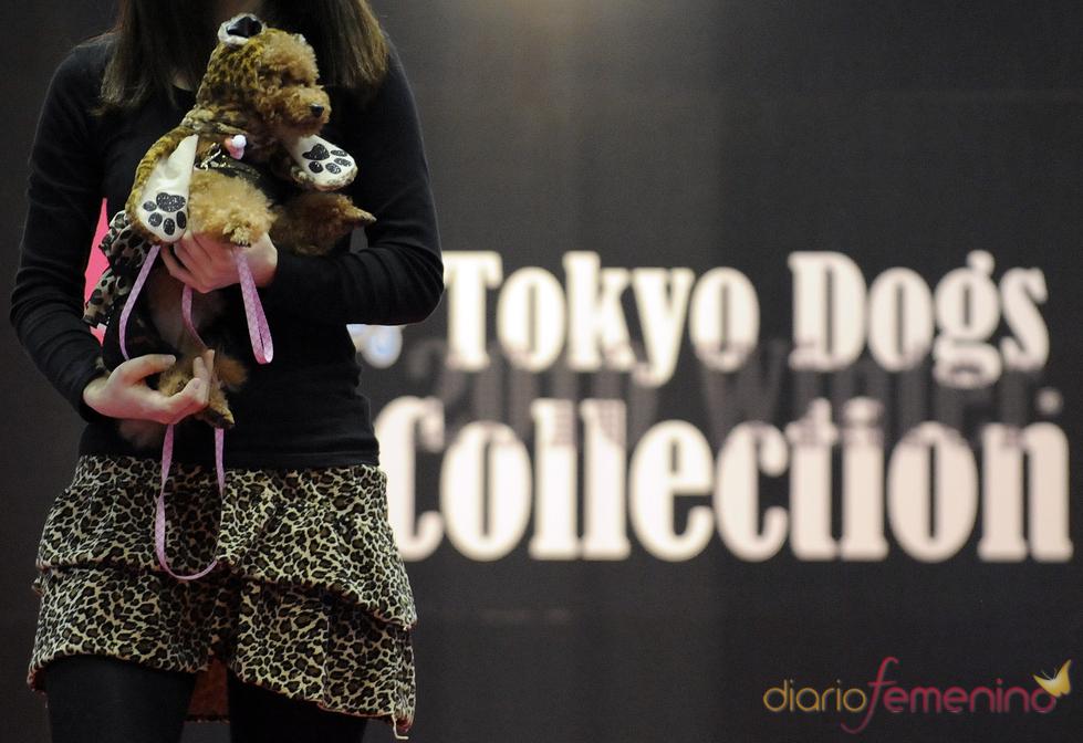 Estampado de leopardo, tendencia en la moda perruna