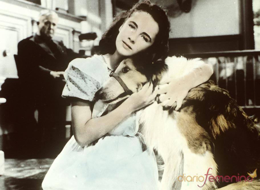 Una jovencísima Elisabeth Taylor en 'El coraje de Lassie'
