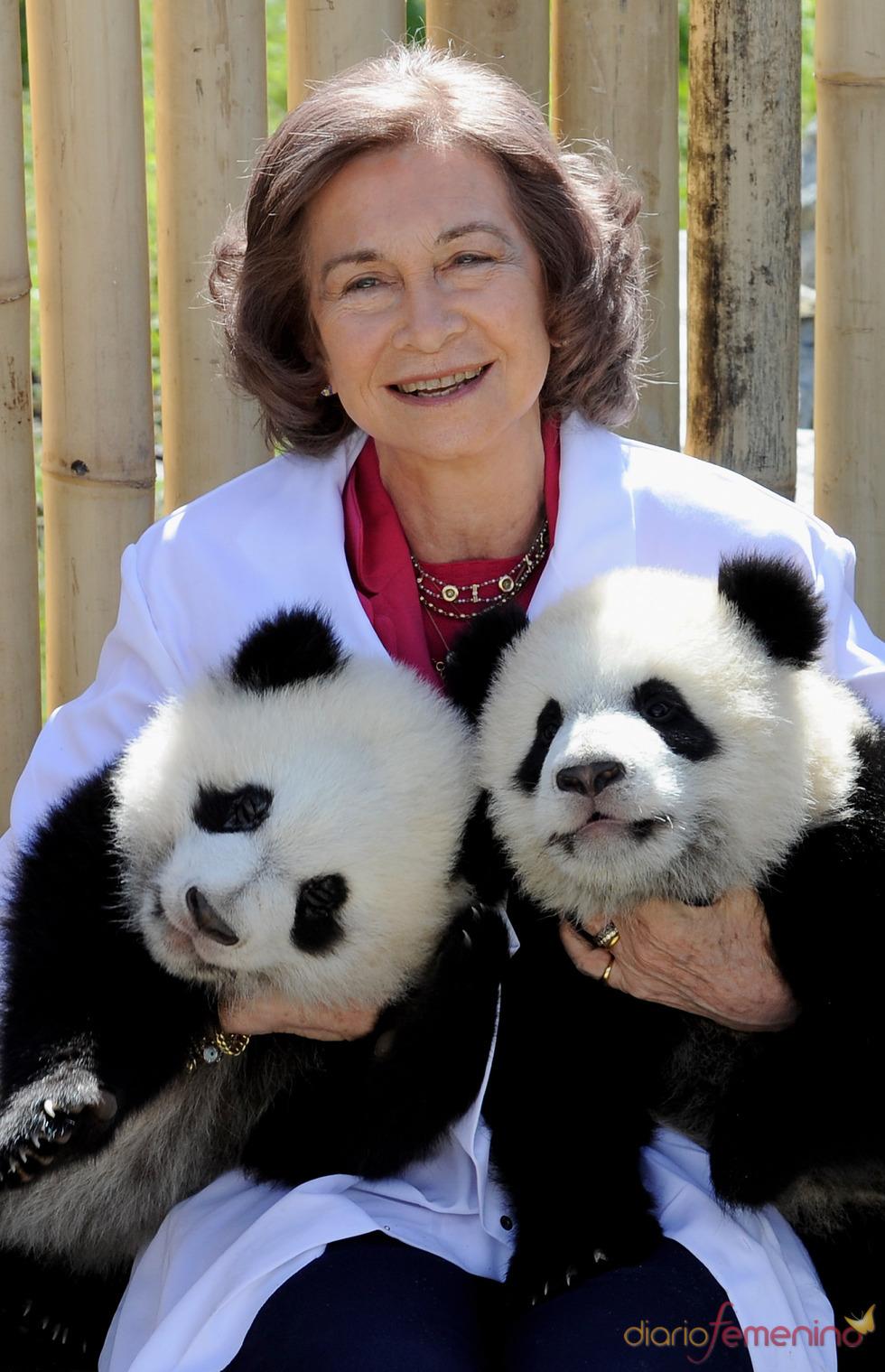 La Reina Sofía con los osos panda del zoo de Madrid