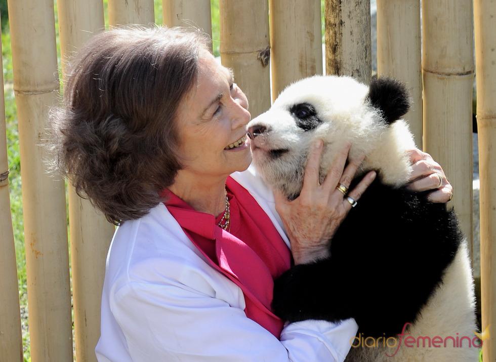 La Reina Sofía acaricia a un oso panda