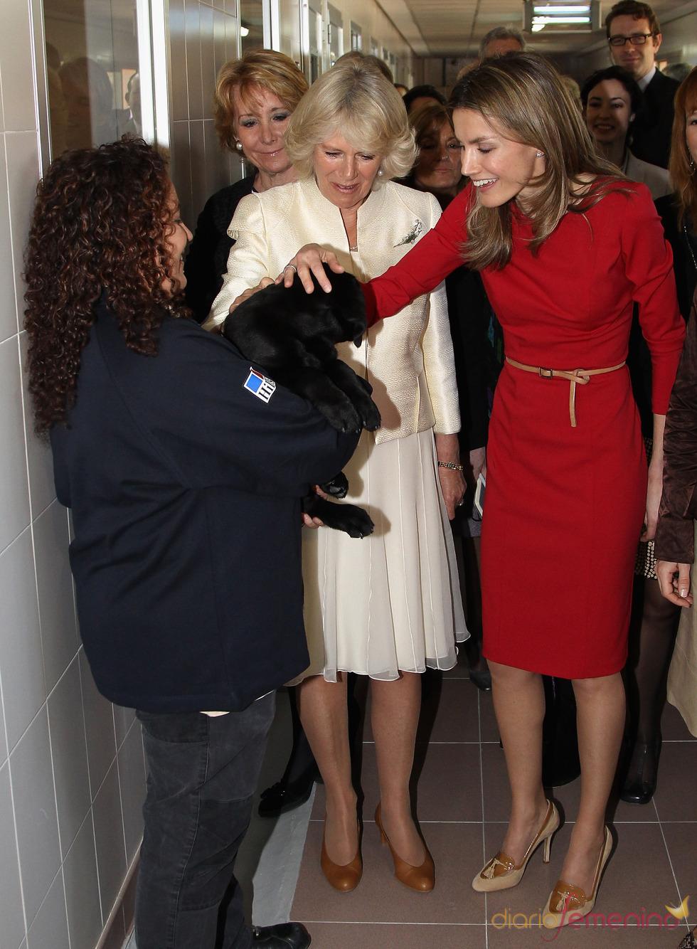 Doña Letizia y Camilla Parker Bowles acarician a un perro en la Fundación ONCE