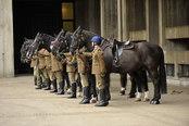 Caballos preparados para el desfile de la boda del príncipe Guillermo y Kate Middleton