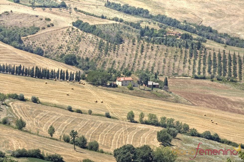 Viñedo alrededor de Montepulciano en la Toscana