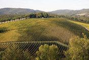 Ruta del vino Chianti en la Toscana