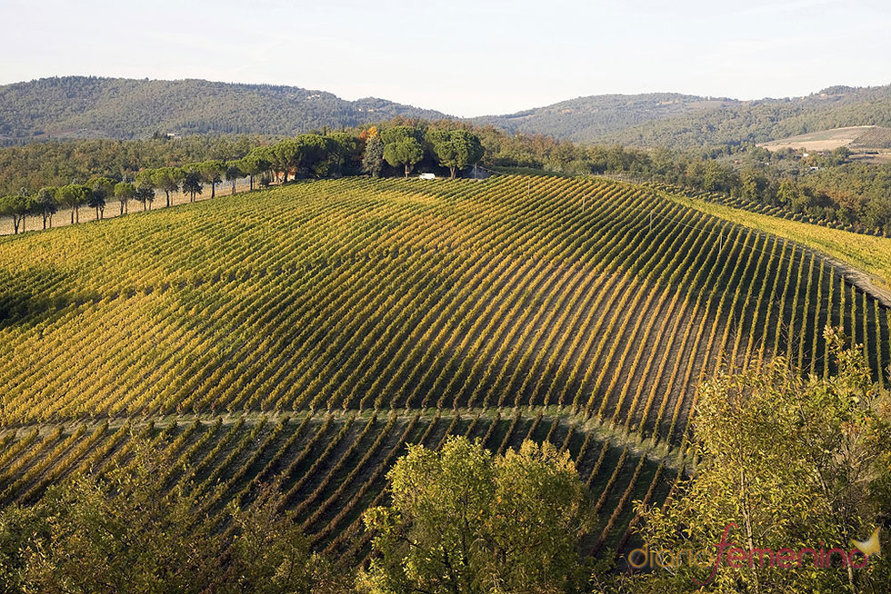 Ruta del vino chianti en la toscana - Vacaciones en la toscana ...