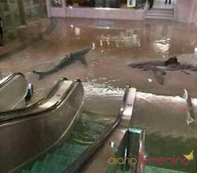 Dos tiburones son arrastrados hasta el metro de Nueva York