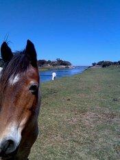 Montar a caballo en el Alentejo portugués