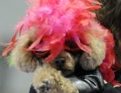 'Tokyo Dogs Collection', la moda para perros