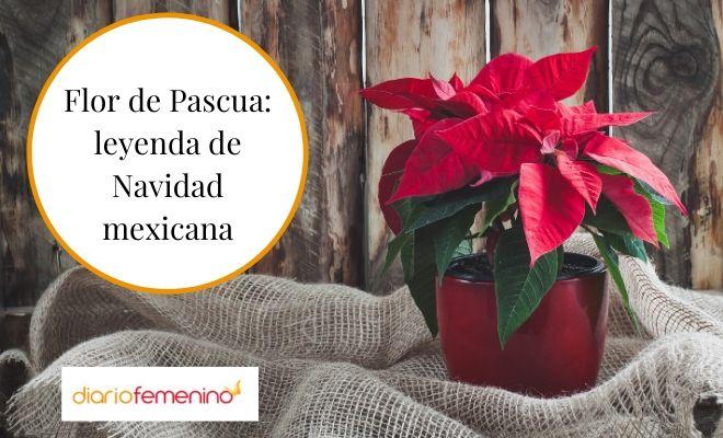La Flor De Pascua Leyenda De Navidad Mexicana En Distintas