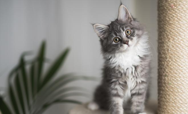 62 Frases Bonitas Sobre Gatos Palabras De Amor Para Tu Mascota