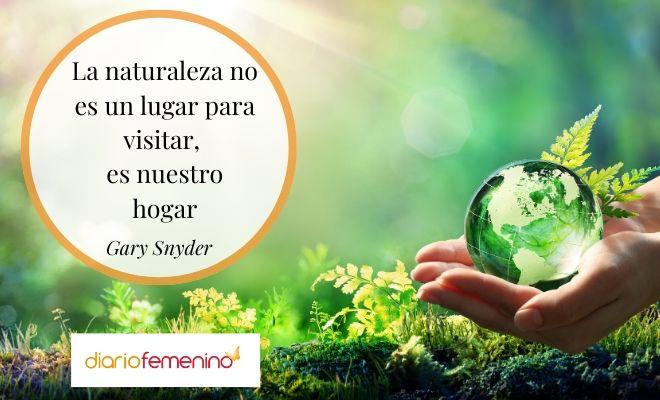 106 Frases De La Naturaleza Para El Día Mundial Del Medio Ambiente