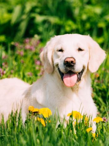 Soñar con perros: significado de los sueños con animales