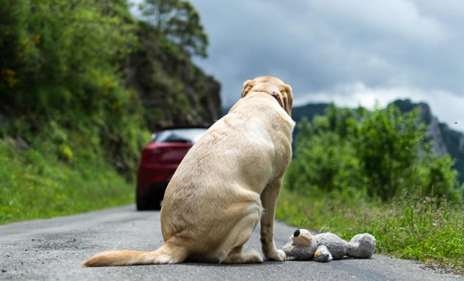 El impactante significado de soñar con perros abandonados